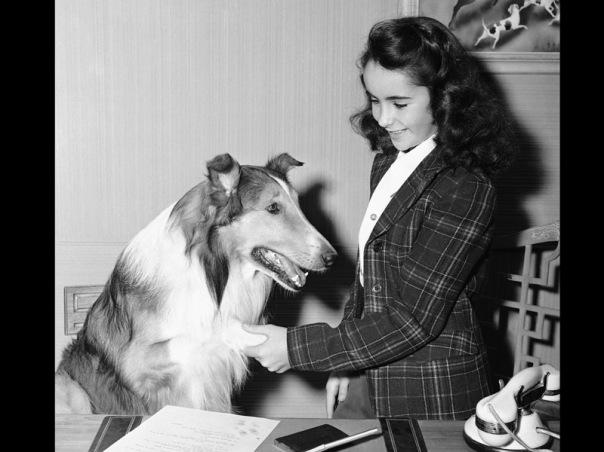 Elizabeth Taylor ketika berumur 11 tahun, dalam serial 'Lassie', 1943.