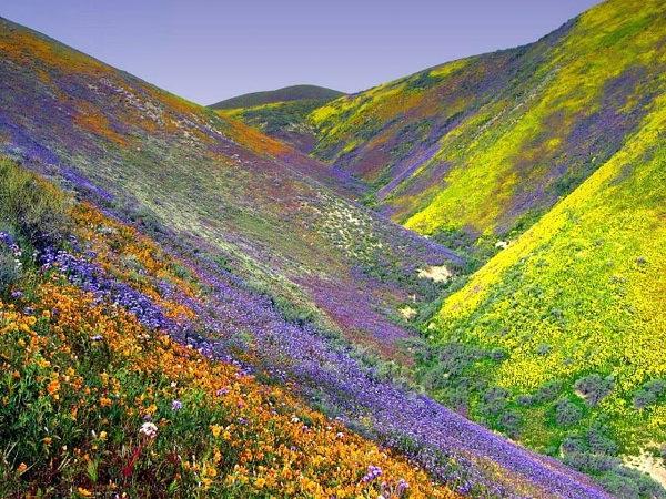 Lembah Bunga